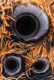 Ampliação extrema - Wolf Spider, Lycosidae Fotos de Stock Royalty Free