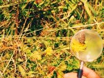 Ampliación de la lupa de la lupa de la mariposa, explorando el mundo, sentido de la maravilla Imagen de archivo