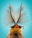 Ampliación extrema - cabeza del mosquito, Chironomus, vista delantera fotografía de archivo