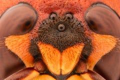Ampliación extrema - ojo gigante de la avispa Imagenes de archivo
