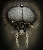 Ampliación extrema - retrato negro de la avispa Fotografía de archivo