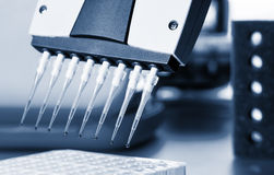 Amplification analysis assay biology Stock Images
