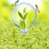 Ampola com planta e borboleta Imagem de Stock Royalty Free