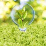 Ampola com planta para dentro Fotos de Stock Royalty Free