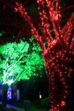 Ampola de incandescência que pendura acima da árvore Fotografia de Stock Royalty Free