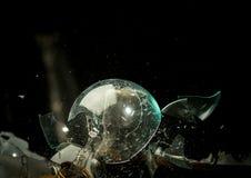 A ampola de vidro clara tem um hammerhead conduzido dentro do sph Imagem de Stock Royalty Free