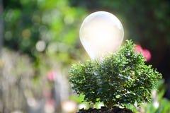 Ampola e árvore para a ideia ou o sucesso ou energia solar Fotos de Stock