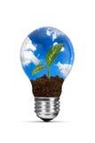Ampola e planta verde crescente fotos de stock royalty free