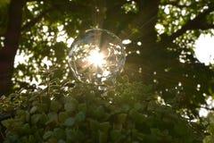 Ampolas com as plantas verdes que salvar o conceito da energia imagem de stock royalty free