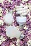 Ampolas, encontrando-se nas flores do lilac Fotografia de Stock