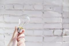 Ampoule à disposition photo stock