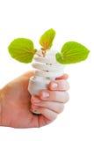 Ampoule écologique image libre de droits