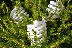 Ampoule économiseuse d'énergie Photographie stock libre de droits
