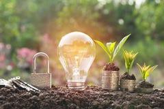 Ampoule économiseuse d'énergie avec l'élevage de serrure et d'arbre Image libre de droits