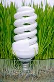 Ampoule économiseuse d'énergie dans l'herbe Photo stock
