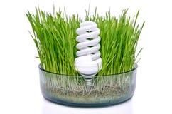 Ampoule économiseuse d'énergie dans l'herbe Photos libres de droits