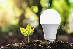 ampoule économiseuse d'énergie de concept avec l'élevage et le soleil d'usine Image libre de droits