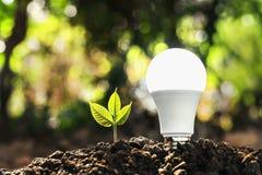 ampoule économiseuse d'énergie de concept avec l'élevage d'usine Image stock
