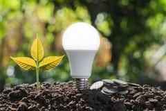 ampoule économiseuse d'énergie de concept avec l'élevage d'usine et le sta d'argent Photos stock