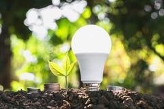 ampoule économiseuse d'énergie de concept avec l'élevage d'usine et le sta d'argent Image libre de droits