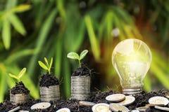 Ampoule économiseuse d'énergie et arbre s'élevant sur des piles de pièces de monnaie dessus photographie stock