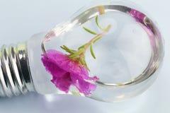 Ampoule électrique et fleur Photographie stock