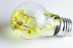 Ampoule électrique et fleur Image libre de droits