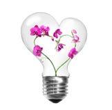 Ampoule avec des orchidées dans la forme du coeur Image stock