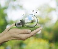 Ampoule avec des turbines de vent et forêt à l'intérieur dans des mains sur le gree image libre de droits