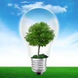 Ampoule avec l'arbre photographie stock libre de droits