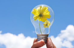 Ampoule avec la belle fleur à l'intérieur photo libre de droits