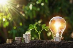 ampoule avec la pile de jeune usine et d'argent sur le sol énergie d'économie de concept photographie stock