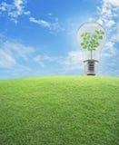 Ampoule avec le petit champ d'herbe intérieure et verte d'usine au-dessus du bl Photos stock