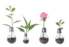 Ampoule avec les usines et le collage rose image libre de droits