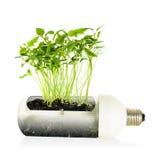 Ampoule d'énergie d'Eco. Photographie stock