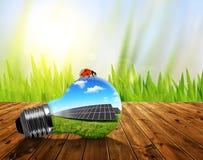Ampoule d'Eco sur le conseil en bois Photo stock