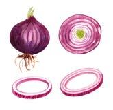 Ampoule d'oignon rouge, incision et anneaux découpés en tranches Image stock