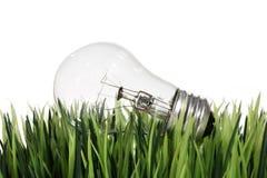 Ampoule dans l'herbe image libre de droits