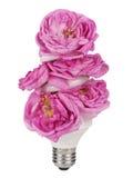 Ampoule de floraison Photos stock