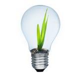 Ampoule et pousse verte à l'intérieur Photos stock