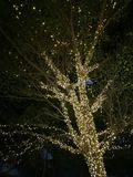 Ampoule extérieure décorative de ficelle accrochant sur l'arbre dans le jardin à la nuit - bokeh décoratif de lumières de Noël, n photo libre de droits