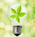 ampoule favorable à l'environnement Images libres de droits