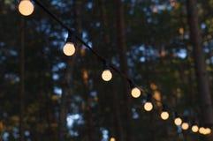 Ampoules extérieures sur un fil contre la forêt de crépuscule Image stock