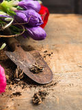 Ampoules rustiques de witn de scoop des fleurs sur le fond en bois Photo stock
