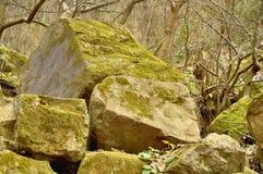 Ampuł skały zakrywać z mech w lesie przez drzew Fotografia Royalty Free