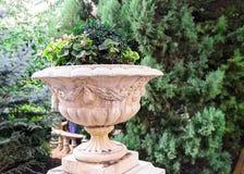 Ampuła garnek kwiaty w parku zdjęcia royalty free