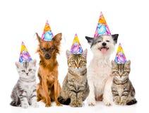 Ampuła grupuje koty i psy w urodzinowych kapeluszach Odizolowywający na bielu Obrazy Stock