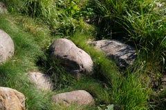Ampuła kamienie w trawie fotografia royalty free
