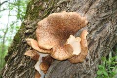 Ampuła rozrasta się dorośnięcie na drzewie Obraz Royalty Free