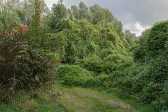 Ampuła zielenieje gąszcze w chmurnej pogodzie zdjęcie royalty free
